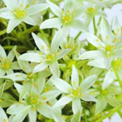 """Obrazki - Kwiaty - """"Białe kwiaty"""""""